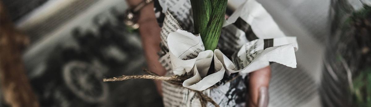 Kukan taimi sanomalehti paketissa